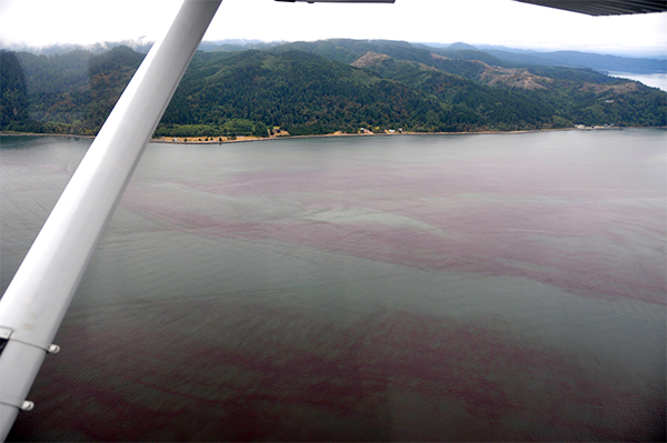 Photo of Red Algal Bloom from airplane