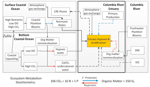 Conceptual diagram illustrating the geographic origin of identified (solid arrows) or proposed (dashed arrows) mechanisms or processes affecting hypoxia and/or acidification in the estuary and plume. Colored arrows indicate where ecosystem metabolic proce